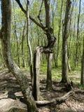 Ασυνήθιστα δέντρα Στοκ εικόνα με δικαίωμα ελεύθερης χρήσης