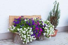 Ασυνήθιστος με τα λουλούδια Στοκ Φωτογραφίες