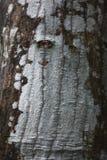 Ασυνήθιστος ξύλινος φλοιός δέντρων στοκ φωτογραφίες
