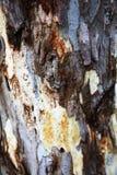Ασυνήθιστος ξύλινος φλοιός δέντρων στοκ εικόνες με δικαίωμα ελεύθερης χρήσης