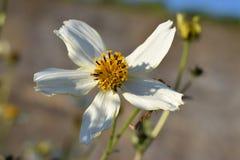 Ασυνήθιστο άσπρο λουλούδι Στοκ Φωτογραφία