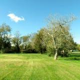 Ασυνήθιστο δέντρο Στοκ φωτογραφίες με δικαίωμα ελεύθερης χρήσης