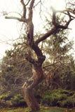 Ασυνήθιστο και πολύ ενδιαφέρον δέντρο μηλιάς την άνοιξη στοκ εικόνες