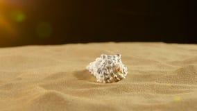 Ασυνήθιστο κοχύλι θάλασσας, λευκό, στην άμμο, κίτρινο φως απόθεμα βίντεο