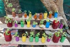Ασυνήθιστο κρεβάτι λουλουδιών στον κήπο Ένα κρεβάτι λουλουδιών από τα παλαιά μπουκάλια νερό το σχέδιο Άνοιξη, καλοκαίρι, κήπος χρ Στοκ εικόνες με δικαίωμα ελεύθερης χρήσης