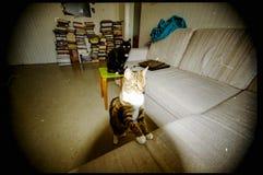 ατελής ανίχνευση ταινιών φωτογραφικών διαφανειών χρώματος με τη σκόνη και τις γρατσουνιές γάτα rel στοκ εικόνα