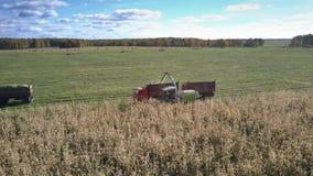 Ατελείωτος τομέας καλαμποκιού με τα λειτουργούντα γεωργικά μηχανήματα απόθεμα βίντεο