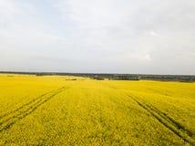 Ατελείωτος τομέας συναπόσπορων βιασμός πεδίων Κίτρινοι τομείς και μπλε ουρανός συναπόσπορων με τα σύννεφα στον ηλιόλουστο καιρό Γ Στοκ φωτογραφίες με δικαίωμα ελεύθερης χρήσης