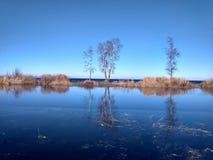 Ατελείωτο μπλε του φθινοπώρου στη Σιβηρία στοκ εικόνες με δικαίωμα ελεύθερης χρήσης