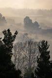Ατελείωτο treeline Στοκ φωτογραφία με δικαίωμα ελεύθερης χρήσης