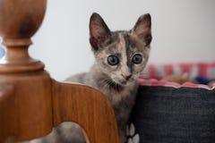 Ατημέλητη γάτα Στοκ Εικόνες