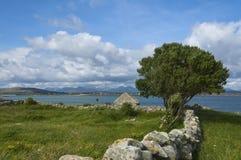 ατλαντικό παλαιό δέντρο κι Στοκ εικόνες με δικαίωμα ελεύθερης χρήσης