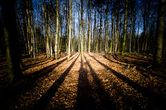 Ατμοσφαιρικό δάσος στοκ φωτογραφίες με δικαίωμα ελεύθερης χρήσης