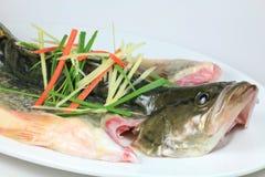 ατμός μανταρινιών ψαριών Στοκ Φωτογραφίες