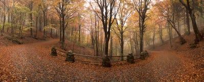 Ατμόσφαιρα και χρώματα του φθινοπώρου Στοκ Εικόνες