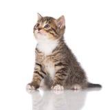 λατρευτό γατάκι τιγρέ Στοκ φωτογραφία με δικαίωμα ελεύθερης χρήσης