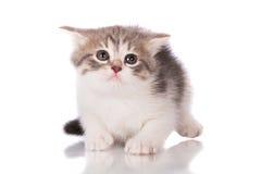 λατρευτό γατάκι τιγρέ Στοκ εικόνες με δικαίωμα ελεύθερης χρήσης