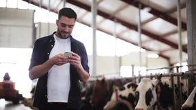 Ατόμων στο smartphone και τις αγελάδες στο γαλακτοκομικό αγρόκτημα απόθεμα βίντεο