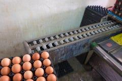 Αυγά από το αγρόκτημα κοτών στη συσκευασία και την παλαιά μηχανή κλιμάκων βάρους για Στοκ Εικόνα