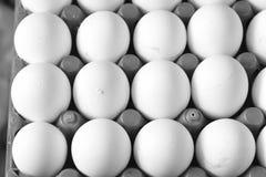 Αυγά! Αυγά!! Αυγά!!! Στοκ Εικόνες