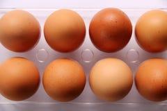 Αυγά για το μαγείρεμα Στοκ Εικόνα