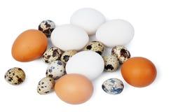 αυγά διάφορα Στοκ Φωτογραφία