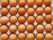 αυγά εμπορευματοκιβωτ Στοκ Φωτογραφίες