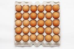 αυγά εμπορευματοκιβωτ Στοκ φωτογραφίες με δικαίωμα ελεύθερης χρήσης