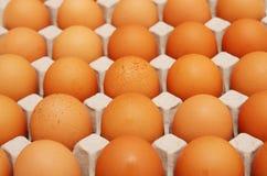 αυγά εμπορευματοκιβωτ Στοκ εικόνα με δικαίωμα ελεύθερης χρήσης