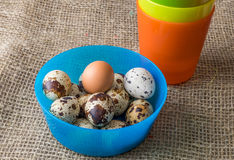 Αυγά και κοτόπουλο ορτυκιών για τη γιορτή Πάσχας για το χρωματισμό στοκ φωτογραφία