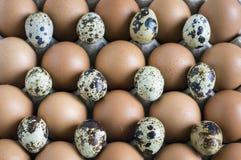 Αυγά και κοτόπουλο ορτυκιών σε ένα εμπορευματοκιβώτιο χαρτονιού στοκ φωτογραφία με δικαίωμα ελεύθερης χρήσης