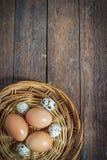 Αυγά και ορτύκια κοτόπουλου Στοκ Εικόνες