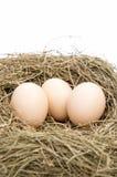 Αυγά και φωλιά Στοκ Φωτογραφίες