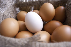 αυγά καλαθιών Στοκ φωτογραφία με δικαίωμα ελεύθερης χρήσης