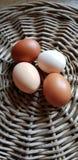 Αυγά κοτόπουλου σε τέσσερα διαφορετικά χρώματα στοκ φωτογραφία