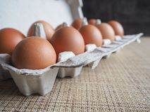 Αυγά κοτόπουλου στο σύνολο Στοκ Εικόνα