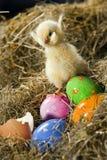 αυγά κοτόπουλου Στοκ Φωτογραφία