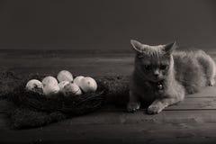 Αυγά κοτόπουλου και μια γάτα Στοκ Φωτογραφία