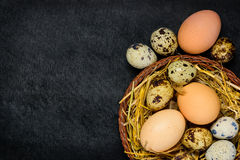 Αυγά κοτόπουλου και ορτυκιών με τη διαστημική περιοχή αντιγράφων Στοκ Εικόνες