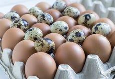 Αυγά κοτόπουλου και ορτυκιών, που συσσωρεύονται σε ένα εμπορευματοκιβώτιο χαρτονιού στοκ εικόνα με δικαίωμα ελεύθερης χρήσης