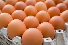 Αυγά κοτόπουλου στην επιτροπή εγγράφου στοκ εικόνα