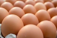 Αυγά κοτόπουλου στην επιτροπή εγγράφου στοκ εικόνες