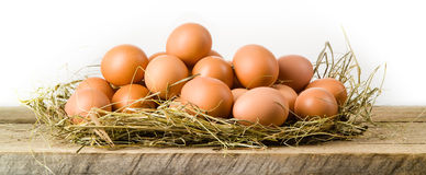 Αυγά κοτόπουλου στη φωλιά σανού. Απομονωμένος. Οργανική τροφή στοκ εικόνες