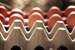 Αυγά κοτόπουλου στο αγρόκτημα Στοκ Φωτογραφίες