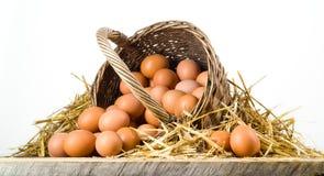 Αυγά κοτόπουλου στο καλάθι που απομονώνεται. Οργανική τροφή στοκ εικόνες