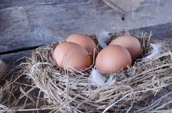 Αυγά κοτόπουλου στο κοτέτσι κοτόπουλου Στοκ εικόνες με δικαίωμα ελεύθερης χρήσης