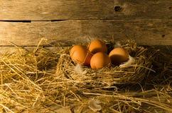 Αυγά κοτόπουλου στο κοτέτσι κοτόπουλου Στοκ εικόνα με δικαίωμα ελεύθερης χρήσης