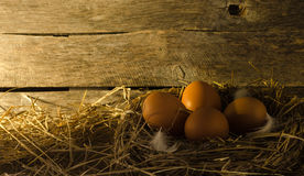 Αυγά κοτόπουλου στο κοτέτσι κοτόπουλου Στοκ Φωτογραφία