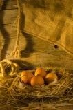 Αυγά κοτόπουλου στο κοτέτσι κοτόπουλου Στοκ Φωτογραφίες