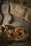 Αυγά κοτόπουλου στο κοτέτσι κοτόπουλου Στοκ φωτογραφίες με δικαίωμα ελεύθερης χρήσης